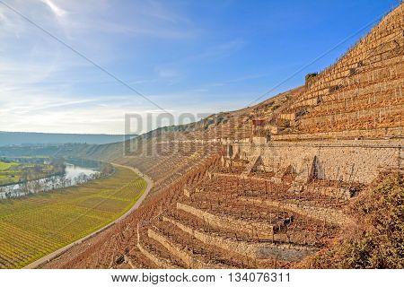 View over the vineyards (Hessigheimer Felsengaerten) - blue sky
