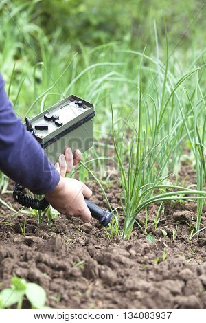 Measuring radiation levels of onion in the garden