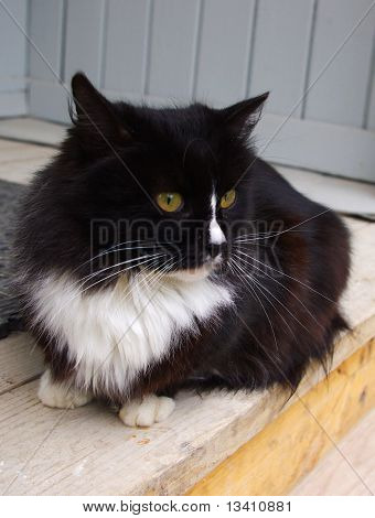 Thoughtful cat sitting on a porch with a blurred background poster
