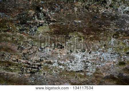 Colorful Stone Wall Texture With Moss And Fungus