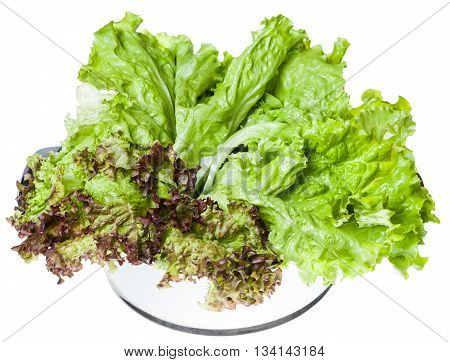 Leaves Of Lollo Rosso And Leaf Lettuce In Pan