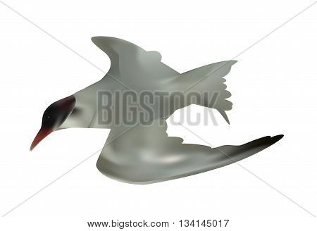 Seabird seagull. Isolated on White background. Vector Illustration. EPS10