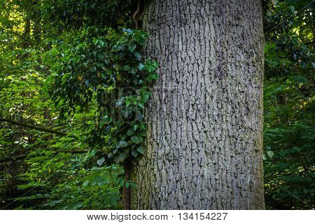 Tree in the forest with green leaves