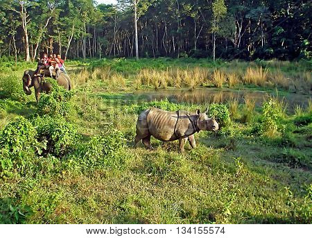 CHITWAN, NEPAL - OCTOBER 04, 2013: Tourists watching and photographing a rhino from the back of an elephant in Chitwan National Park, Nepal