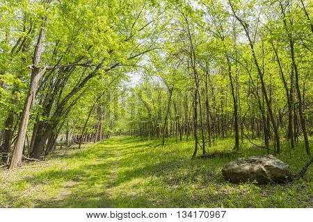 A grassy hiking trail in the woods during spring.