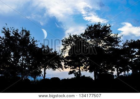 lunatics: trees that love the moon. country scene where trees are seen with the moon in the background.