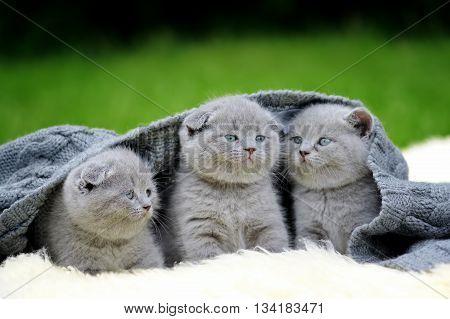Three Kitten On White Blanket