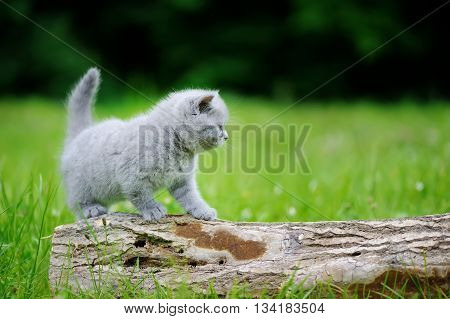 Close Gray Kitten On Tree