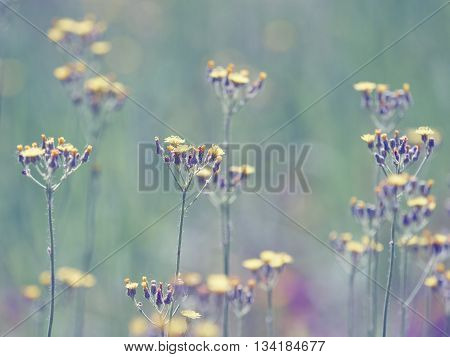 Beautiful Little Meadow Wild Yellow Flowers On A Natural Green Background.