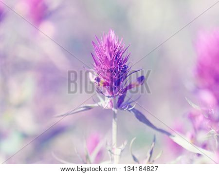 Beautiful Little Meadow Wild Pink Flowers On A Natural  Background.