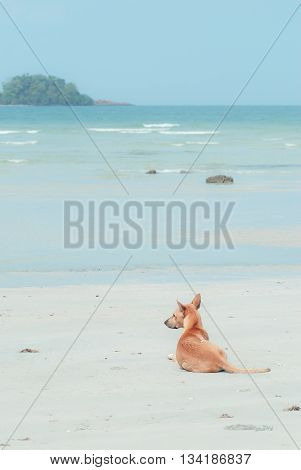 A dog is sitting by the sea