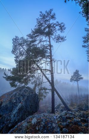 rocks with trees in autumn with fog