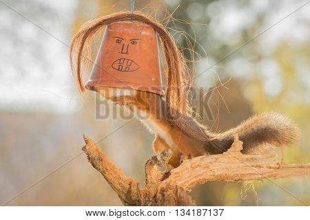 red squirrel standing on a tree trunk with a flower pot with unhappy face