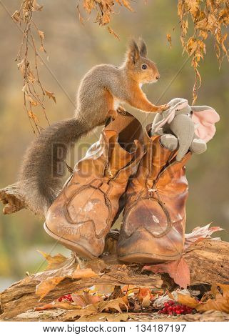 red squirrel standing with shoes and elephant in it