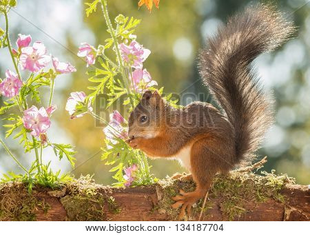 red squirrel is standing with flowers and leaves