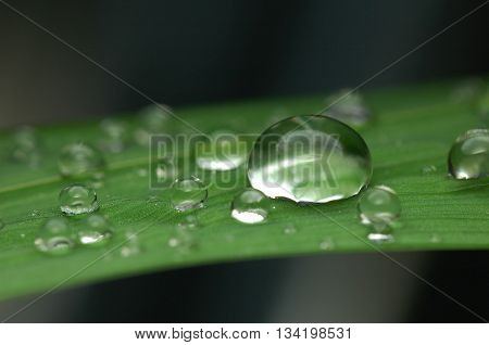Big and small water drop on green leaf
