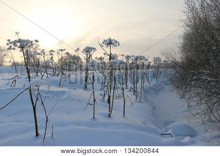 Winter Night And The Plants In The Snow