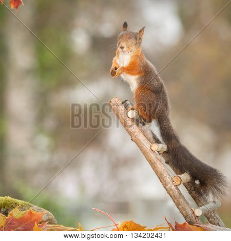 red squirrel with moss and leaves on stairs with closed eyes