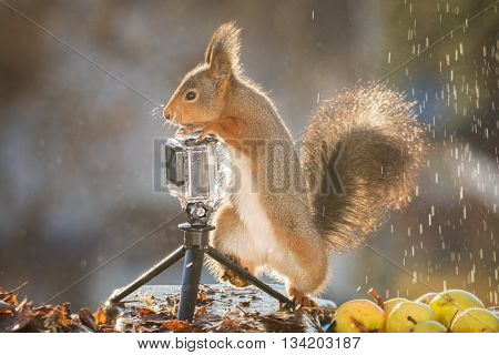 red squirrel is standing in rain with camera
