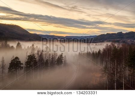 evening forest mountain landscape with mist and trees