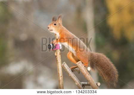 red squirrel is standing on stairs with a camera