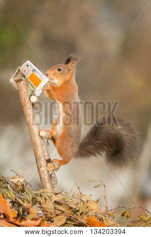 red squirrel is standing on stairs reading a book