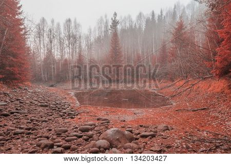 rocks and trees in autumn with with pool and mist