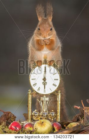 red squirrel is standing on a clock