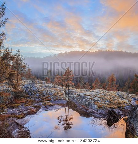 evening forest mountain landscape with mist and reflection