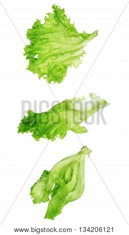 green lettuce leaf isolated on a white background