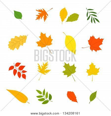 Autumn leaves from different trees. Vector icons isolated on white background. Elements for autumn design. Golden autumn.