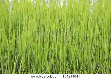 Green grass as a background. Selective focus