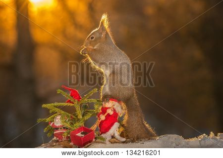 red squirrel sitting on a santa with a christmas tree