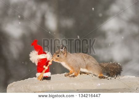 red squirrel standing on ice with christmas doll while snowing