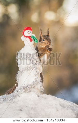 red squirrel standing with a snowman in winter