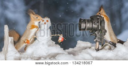 red squirrels with snowman and camera in snow