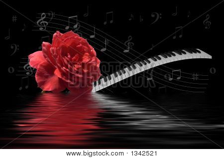 Rose With Keyboard On Water
