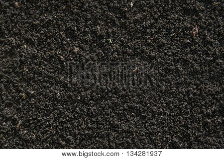 Black soil texture with small plants  germinated
