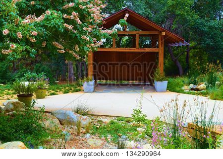 Drought tolerant chaparral plants taken in a residential yard with a modern wooden shed beyond