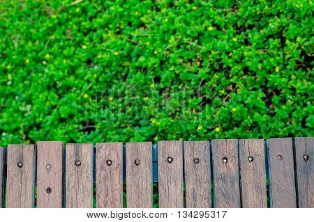 wooden wall behind the green tree background