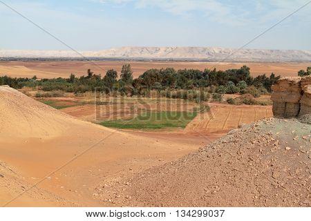 The Oasis of El Qasr in the Sahara desert