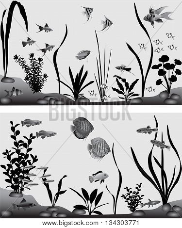 Different species of freshwater fish in aquarium. Black-and-white vector illustration.