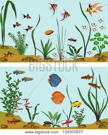Different species of freshwater fish in aquarium. Color vector illustration.