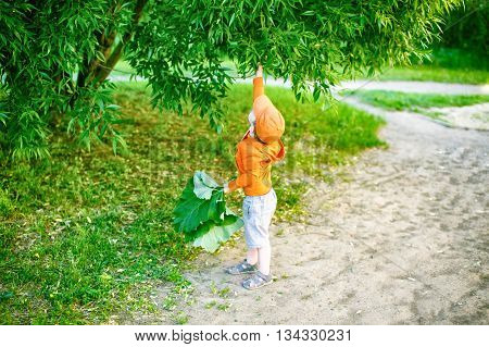 child plucks the leaves from the tree. the little boy is not able to care of nature. the concept of caring for the environment