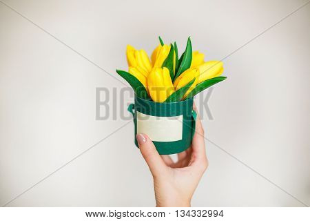 Woman hand with yelowe tulips flowers. white background.