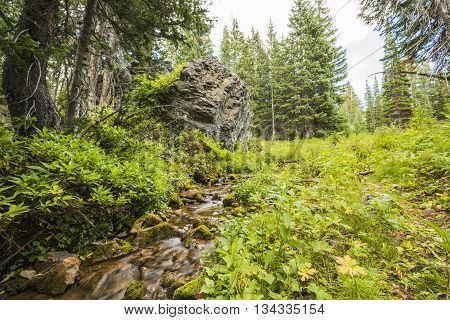 Spring or stream in the Wasatch National Forest Albion Basin in Utah, by Salt Lake City