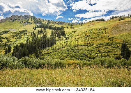 Albion Basin landscape scenery with alpine meadows photographed during summer.