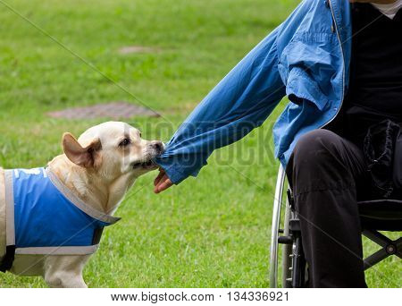 Dog Removes The Jacket To His Disabled Owner.