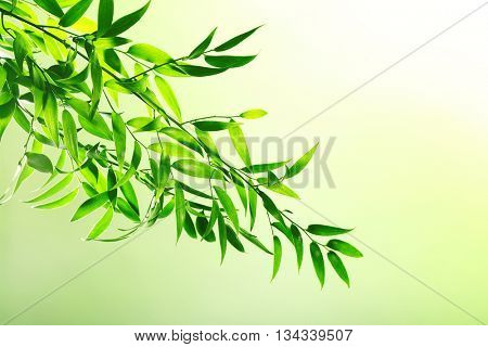 Tree branch with green leaves on color background