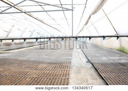 Watering seedlings in greenhouse